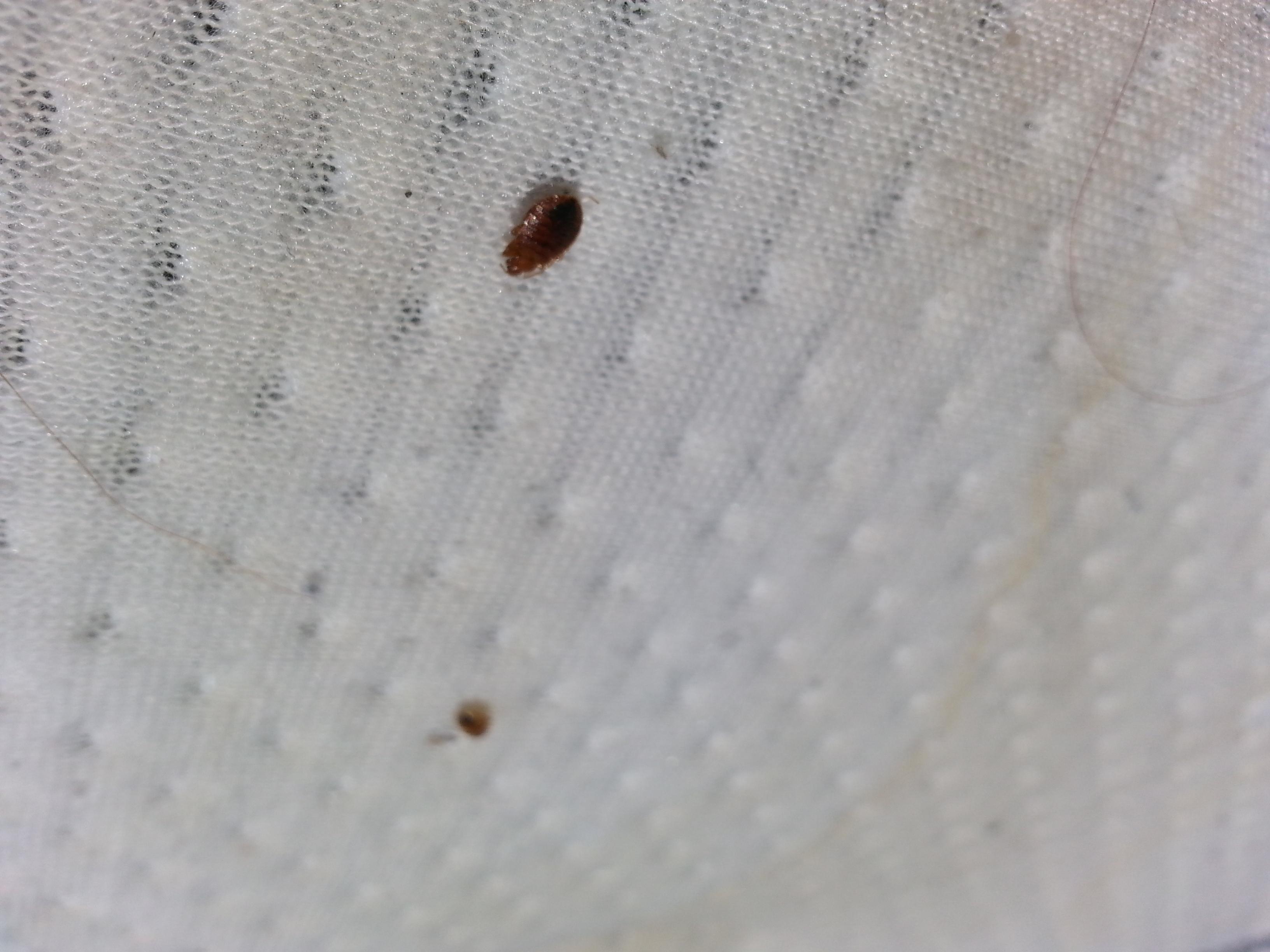 Bed Bug Treatments – Insecta Defense Pest Control