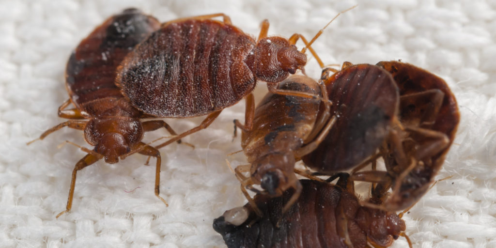 from life facts index a cycle bugs in library bed bug stacks the